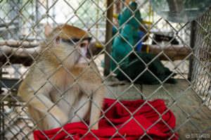 Monkey at Wildlife Waystation